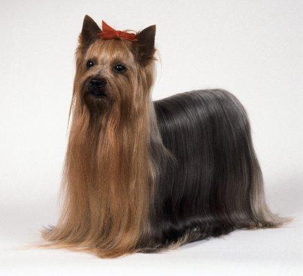 hondenkeuring 3