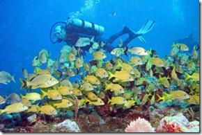 Plongée sous-marine sur les Canyons